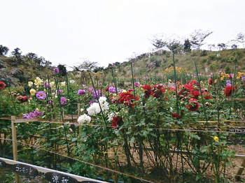 2012年10月06日_PA060801.jpg
