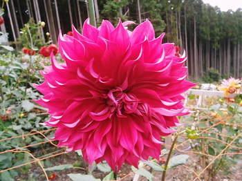 2012年10月06日_PA060804.jpg
