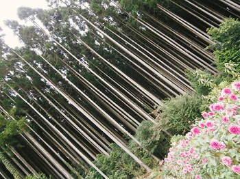 2012年10月06日_PA060805.jpg